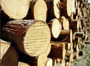Срубы для русской бани часто делают из сосны